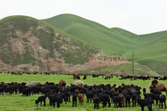 2015-Tajikistan-01
