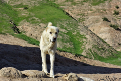 2015-Tajikistan-07
