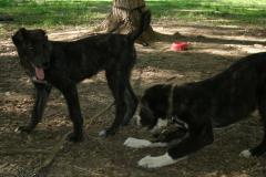 Gaba&Umka-25-05-2011-2