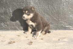Tash-3 weeks old-3