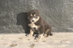 Tash-3 weeks old-5