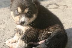 Tash-3 weeks old-2