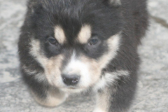 Tash-3 weeks old