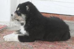 Tash-3 weeks old-7